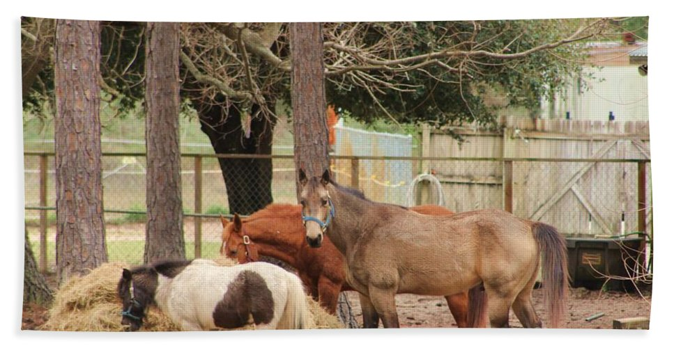 Horse Beach Towel featuring the photograph Dinner Time 3 by Michelle Powell
