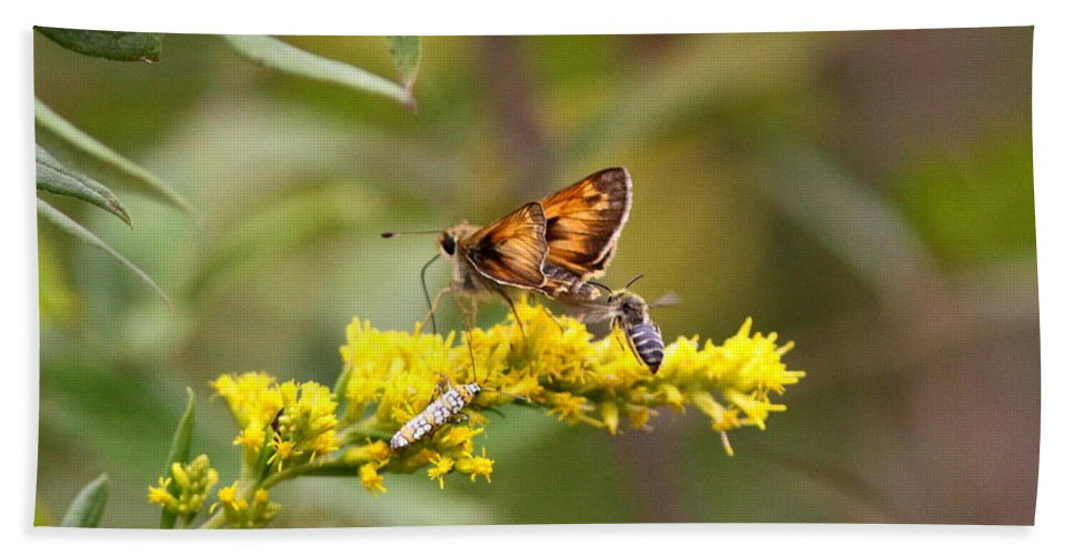 Goldenrod Beach Towel featuring the photograph Diversity - Insects by Travis Truelove
