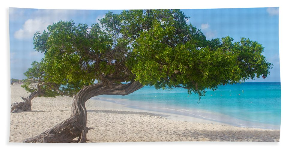 Trees Beach Towel featuring the photograph Divi Trees In Aruba by A New Focus Photography