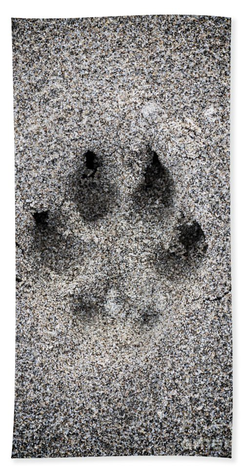 Print Beach Towel featuring the photograph Dog Paw Print In Sand by Elena Elisseeva