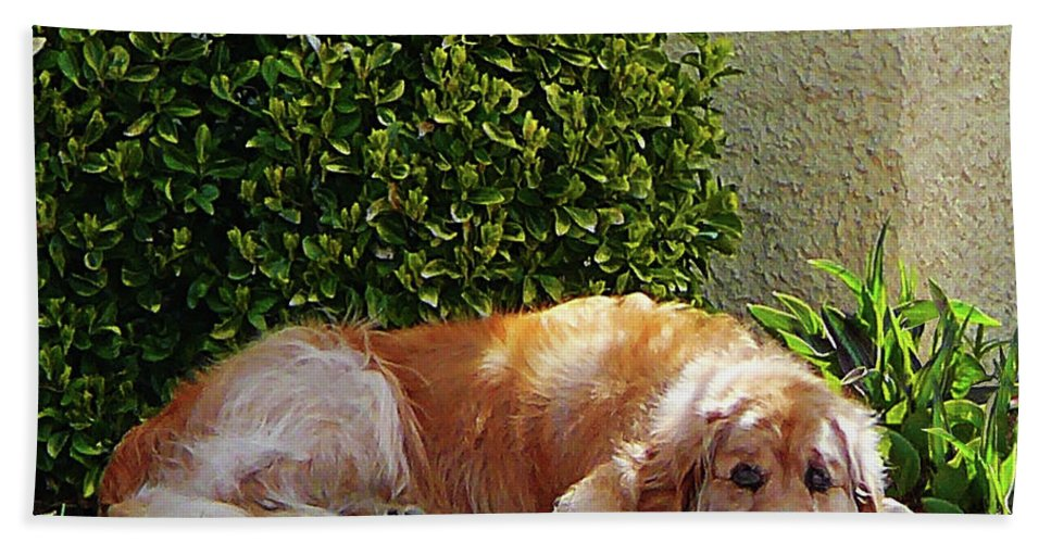 Dog Beach Towel featuring the photograph Dog Relaxing by Susan Savad