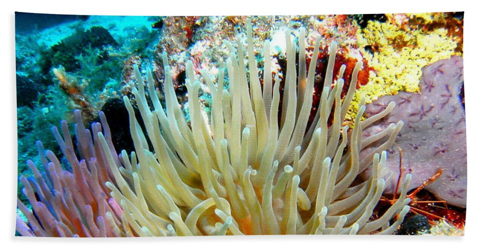 Nature Beach Towel featuring the photograph Double Giant Anemone And Arrow Crab by Amy McDaniel