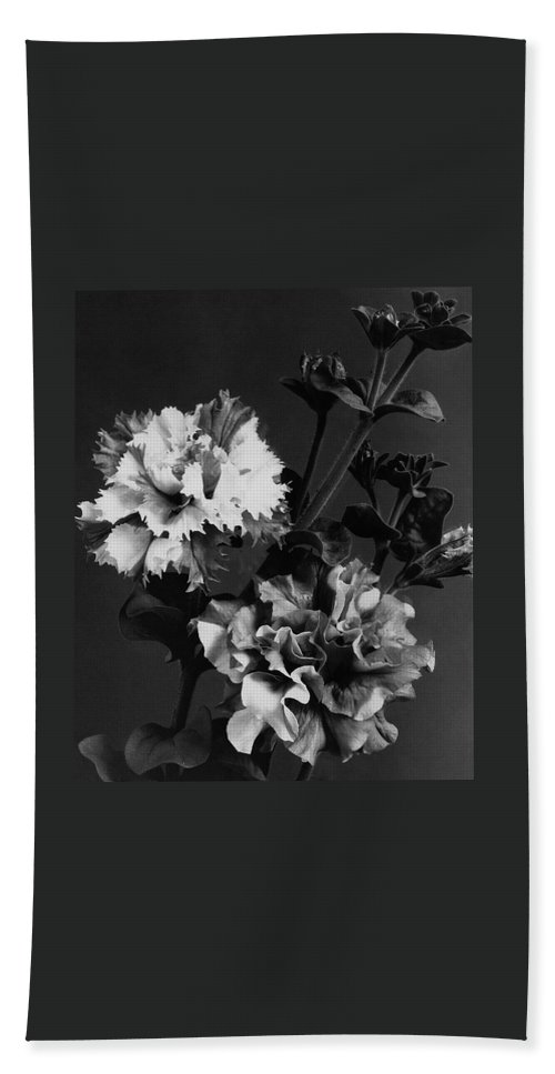 Flowers Beach Towel featuring the photograph Double Petunias by J. Horace McFarland