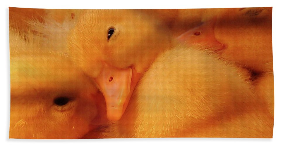 Ducks Beach Towel featuring the photograph Down Of Gold by Douglas Stucky