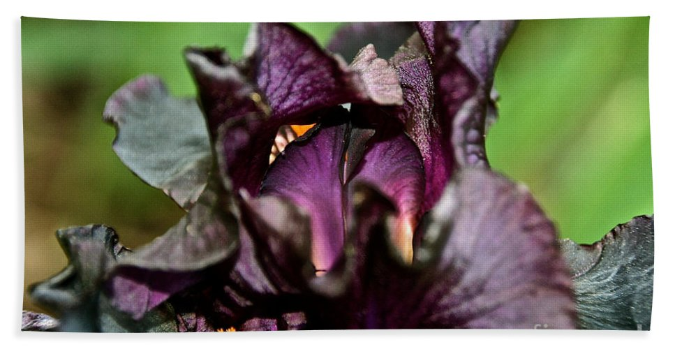 Flower Beach Towel featuring the photograph Dracula's Flower by Susan Herber