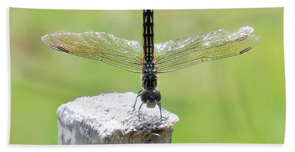 Lynne Miller Beach Towel featuring the photograph Dragonfly Doing A Handstand by Lynne Miller