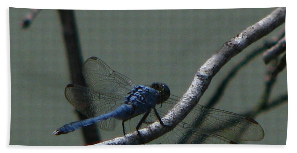 Art For The Wall...patzer Photography Beach Towel featuring the photograph Dragonfly by Greg Patzer