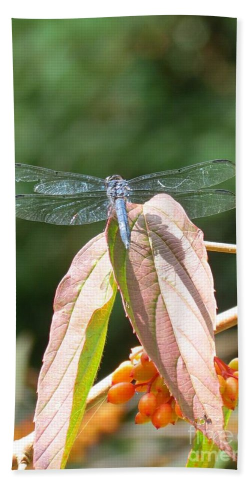 Dragonfly Beach Towel featuring the photograph Dragonfly In Early Autumn by Anita Adams