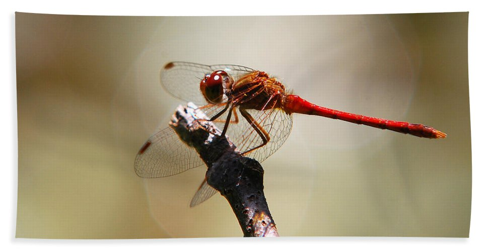 Dragonfly Beach Towel featuring the photograph Dragonfly Light by Christina Rollo