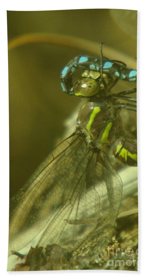 Dragonfly Beach Towel featuring the photograph Dragonfly Macro by Jeff Swan