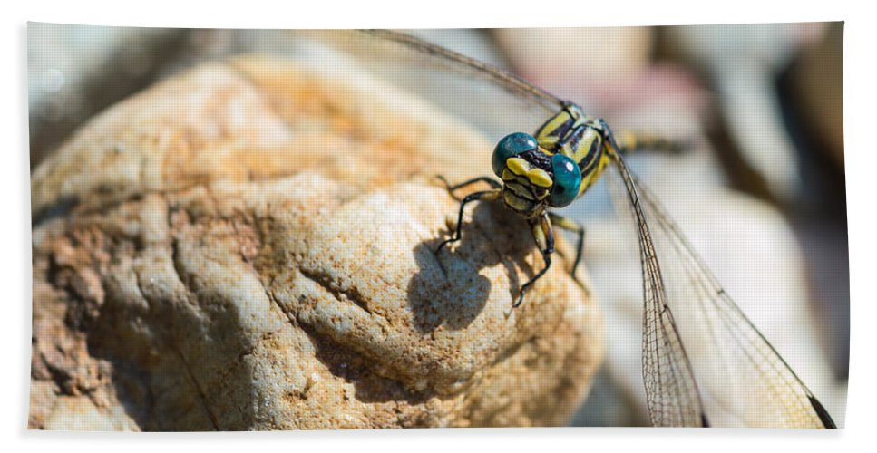 Damselfly Beach Towel featuring the photograph Dragonfly by Marco Oliveira