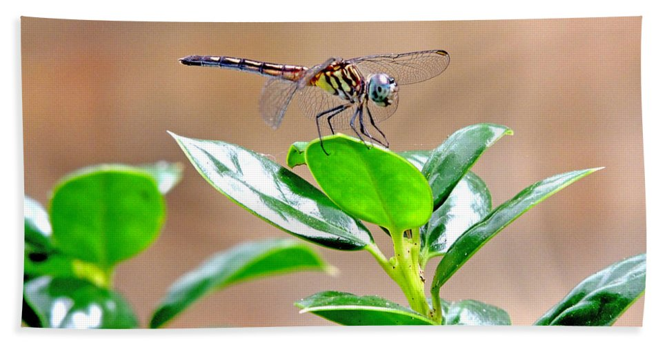 Damselflies Beach Towel featuring the photograph Dragonfly by Marilyn Holkham
