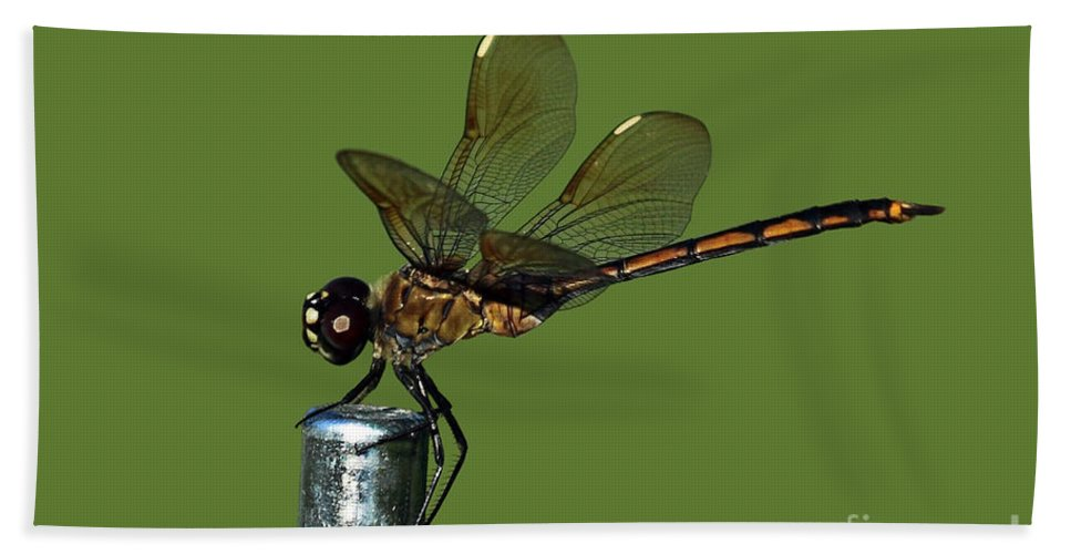 Dragonfly Beach Towel featuring the photograph Dragonfly by Meg Rousher