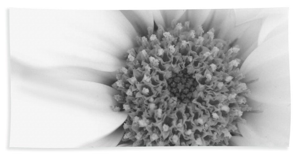 Flower Beach Towel featuring the photograph Dreamland Beginnings by Robin Lewis