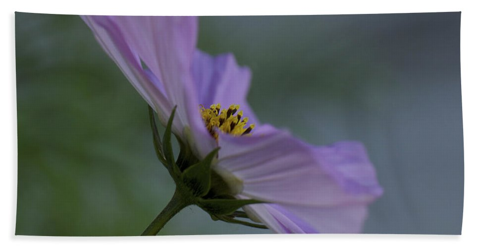 Cosmos Flower Beach Towel featuring the photograph Dreamy Cosmos by Penny Meyers