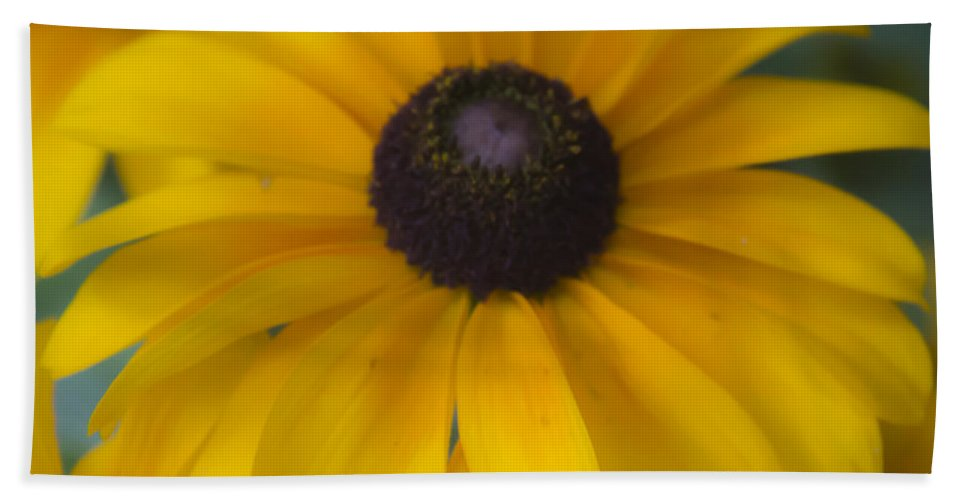 Sunshine Beach Towel featuring the photograph Dreamy Rudbeckia Squared by Teresa Mucha