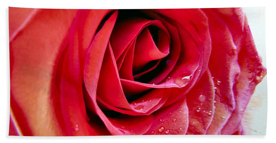 Rose Beach Towel featuring the photograph Droplets In Red by Art Dingo