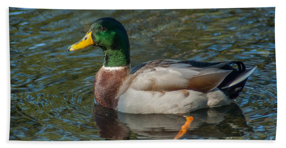 Mallard Duck Beach Towel featuring the photograph Duck Call by Dale Powell