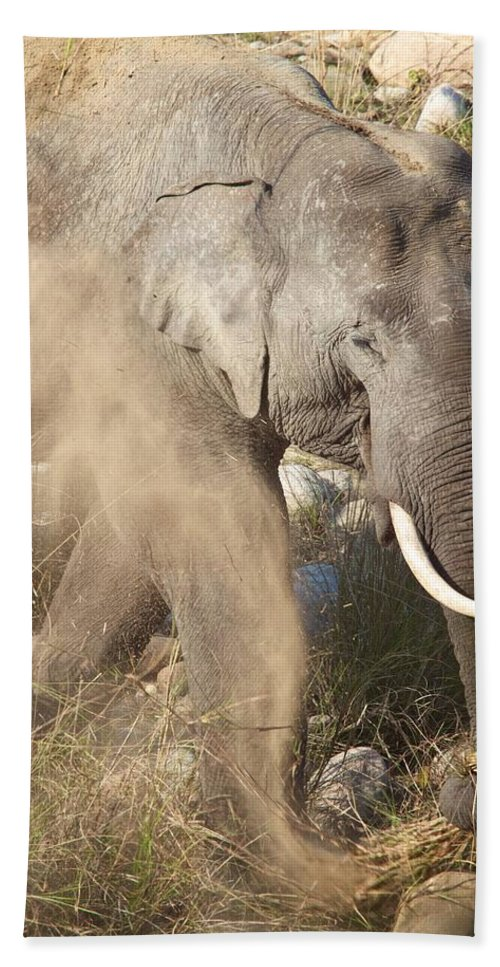 India Beach Towel featuring the photograph Dusting Off Dinner by David Beebe