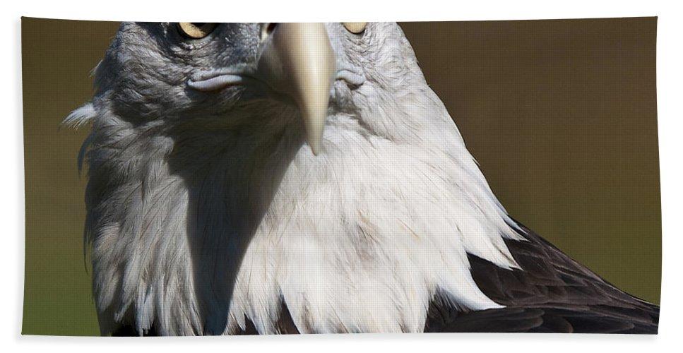 Bald Eagle Beach Towel featuring the photograph Eagle Eye by Paul Cannon