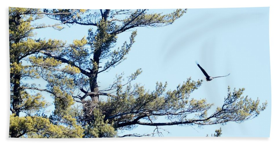 Bald Eagle Beach Towel featuring the photograph Eagle Nest by Thomas Phillips
