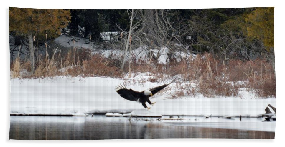 Bald Eagle Beach Towel featuring the photograph Eagle On The Shoreline by Thomas Phillips