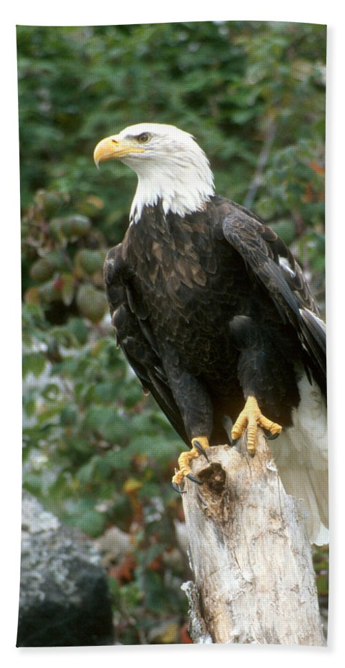 Eagle Beach Towel featuring the photograph Eagle Perched Atop Stump by Larry Allan