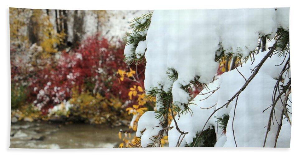 Snow Beach Towel featuring the photograph Early Snow by Fiona Kennard