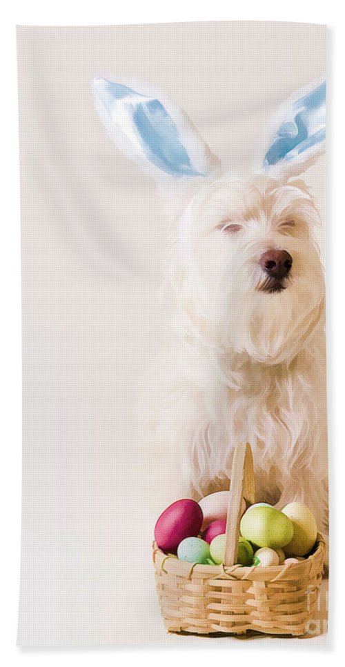 Funny Beach Towel featuring the photograph Easter Bunny Westie by Edward Fielding