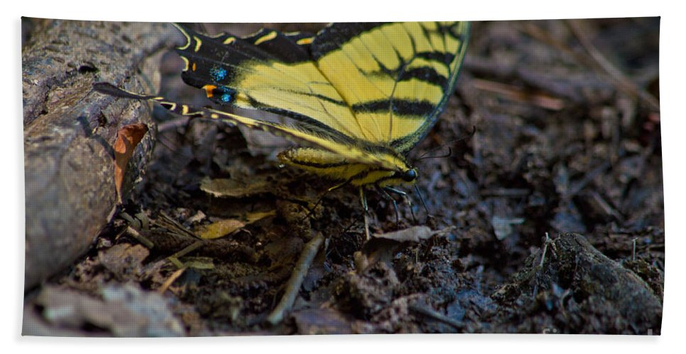 Eastern Beach Towel featuring the photograph Eastern Swallowtail by Scott Hervieux