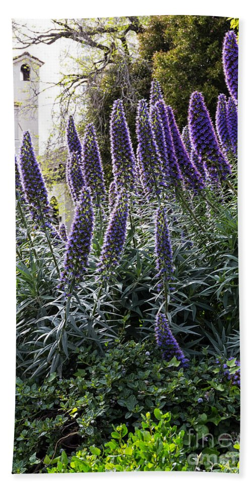 Backlight Beach Towel featuring the photograph Echium And Tower by Kate Brown