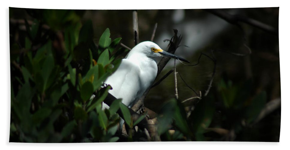 Egret Beach Towel featuring the photograph Egret Of Sanibel 5 by David Weeks