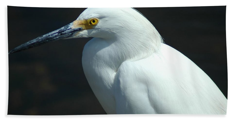 Egret Beach Towel featuring the photograph Egret Of Sanibel 7 by David Weeks