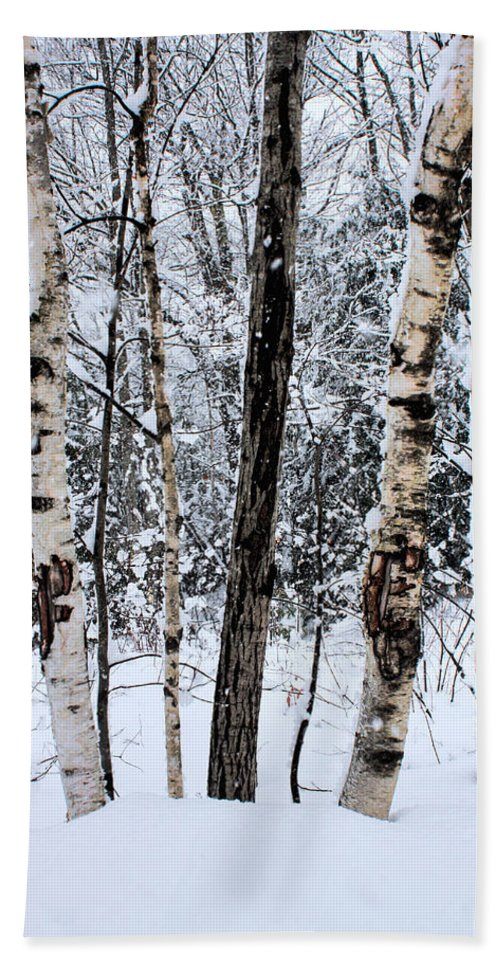 Snow Beach Towel featuring the photograph Elders In A High Country Grove by Wayne King