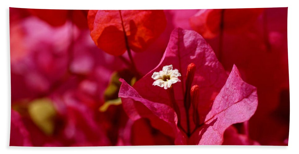 Bougainvillea Beach Towel featuring the photograph Electric Pink Bougainvillea by Rona Black