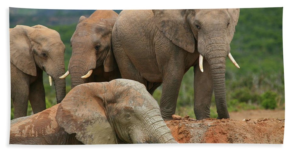 Elephant Beach Towel featuring the photograph Elephant Bath by Bruce J Robinson