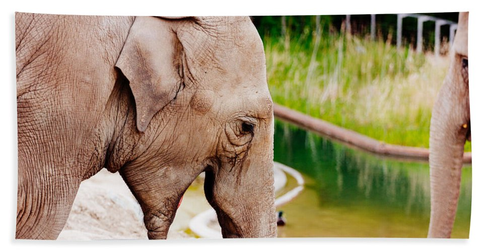 Photography Beach Towel featuring the photograph Elephant Open Mouth by Pati Photography