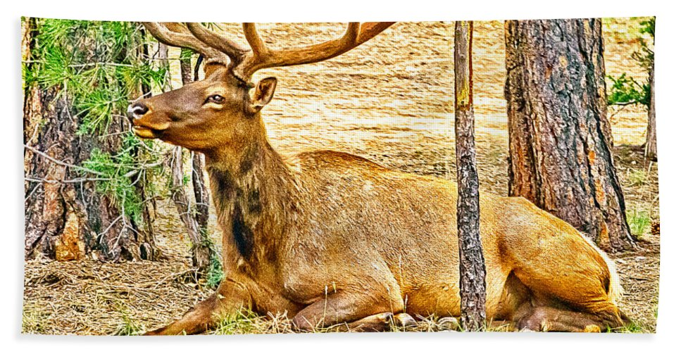 Abyss Beach Towel featuring the photograph Elk In Kiabab National Forest Arizona by Bob and Nadine Johnston
