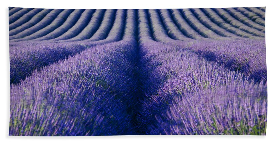 Lavender Beach Towel featuring the photograph Endless Rows by Brian Jannsen