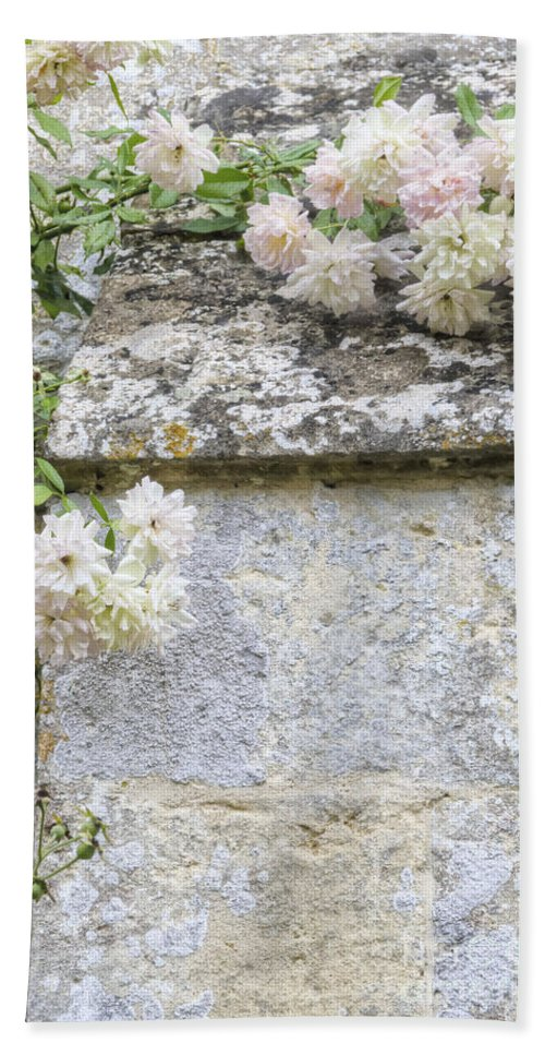 Floral; Flora; Flowers; Rose; Roses; Bush; Vine; Climb; Climbing; Pink; Green; Blue; Stone; Facade; Building; Architecture; White; Aged; Decay; Branches; Tall; Roof; Wall; Side; Green; Leaves; Beautiful; Pretty; Lovely; Serene; Feminine; English Rose; Cultivated; Bunch; Group; Calm Beach Towel featuring the photograph English Roses Vi by Margie Hurwich