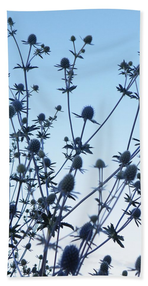 Eryngium. Planum Beach Towel featuring the photograph Eryngium Explosion by Brian Boyle