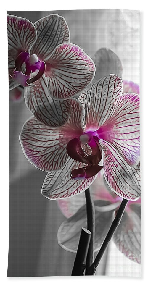 Spring Beach Towel featuring the photograph Ethereal Orchid by Bianca Nadeau