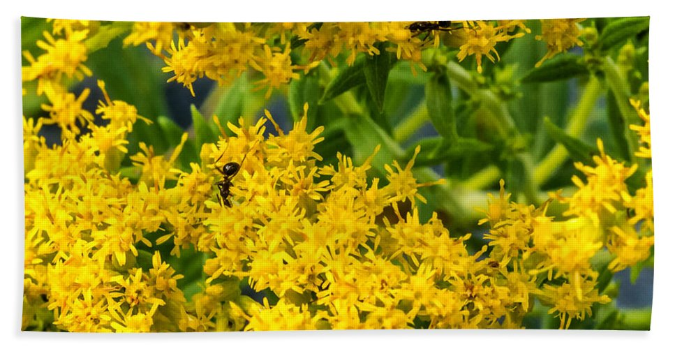 Steve Harrington Beach Towel featuring the photograph Exploring Goldenrod 6 by Steve Harrington