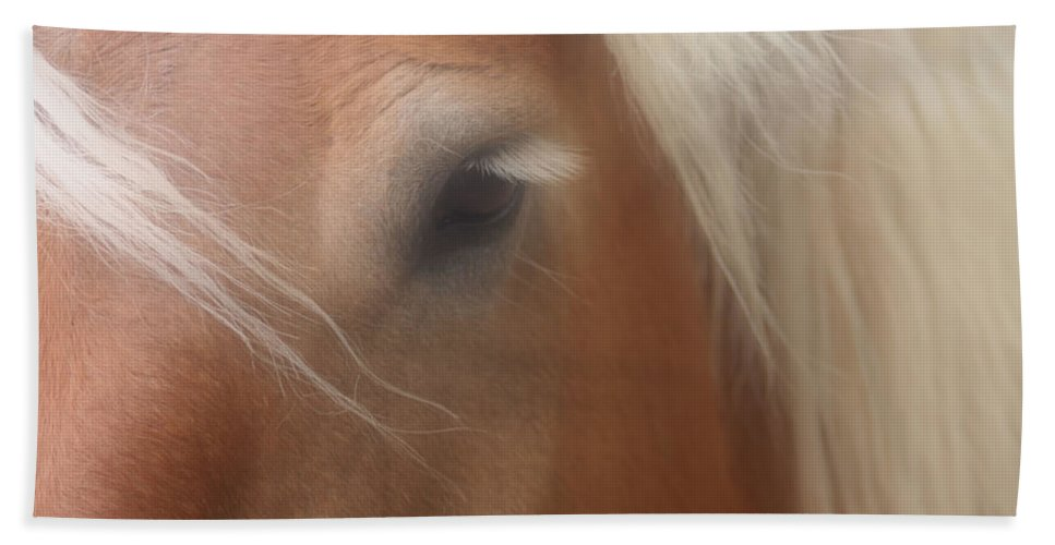 Belgian Beach Towel featuring the photograph Eye Of A Belgian Horse by Smilin Eyes Treasures