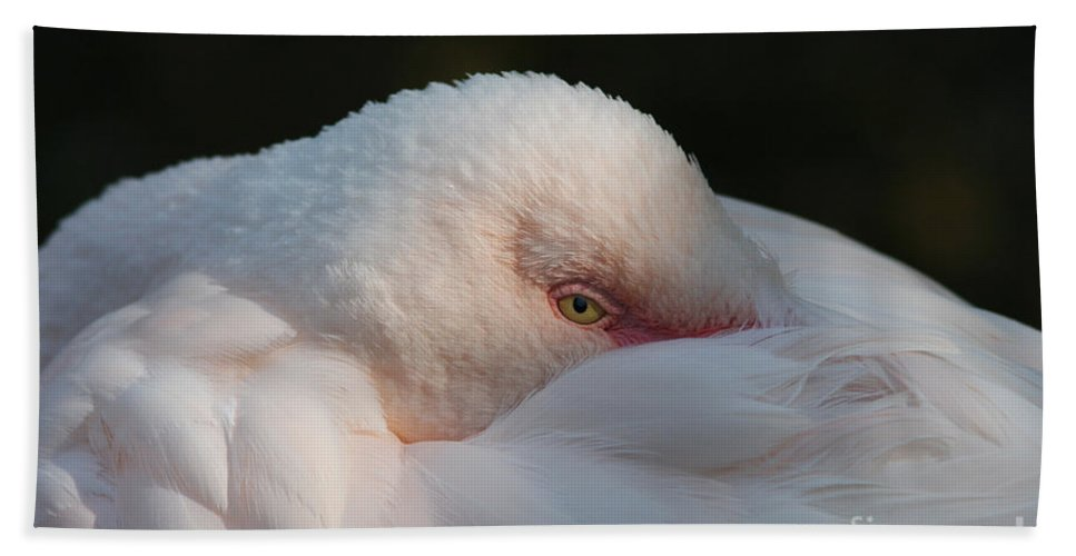 Flamingo Beach Towel featuring the photograph Eye On You by Judy Whitton