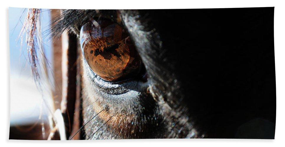 Horse Eyeball Arizona Wickenburg Eyelashes Reflection Beach Towel featuring the photograph Eyeball Reflection by Susie Rieple