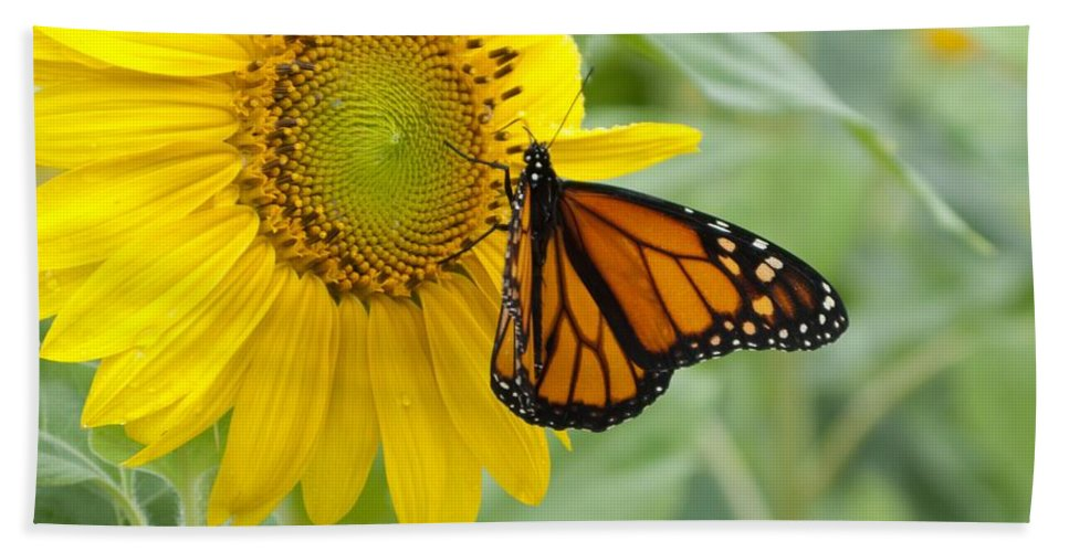 Sunflower Beach Towel featuring the photograph Face To Face by Ann Horn