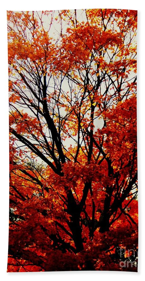 Fall Beach Towel featuring the photograph Fall Colors Cape May Nj by Eric Schiabor