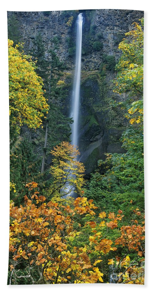 North America Beach Towel featuring the photograph Fall Colors Frame Multnomah Falls Columbia River Gorge Oregon by Dave Welling