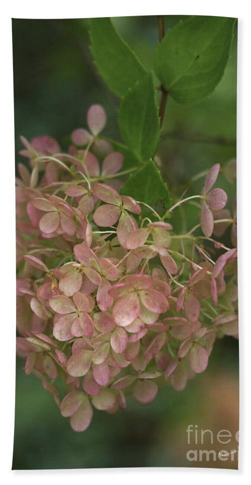 Hydrangea Beach Towel featuring the photograph Fall Is Near by Deborah Benoit
